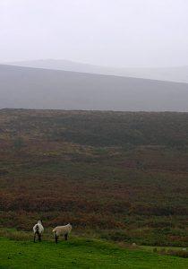Eerie shot of Dartmoor